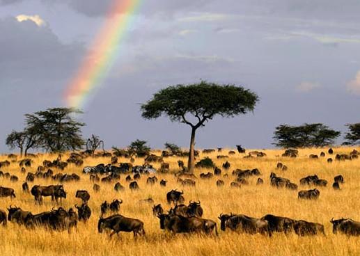"""肯尼亚看动物迁徙 私人飞机""""狩猎""""旅行"""
