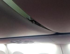 蝎子在机舱行李架上游走 吓坏狮航机上乘客